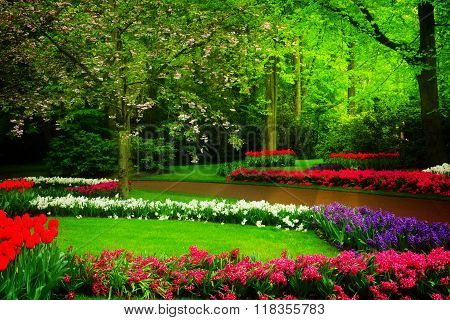 spring garden in Keukenhof, Holland