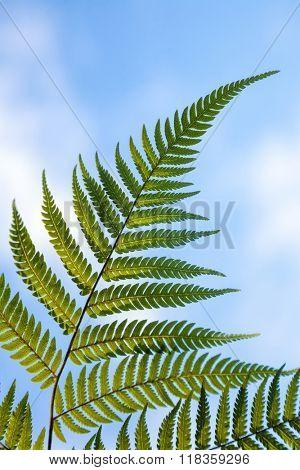 Fern leaves against blue sky in New Zealand