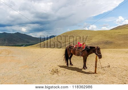 Lone tethered horse in Mongolia