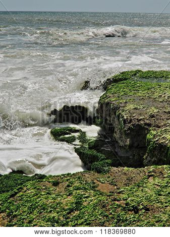 This is a sea shore scene during day time. Green algae grew on sea shore stone make colour contrast with sea water. Water of wave striking on shore.