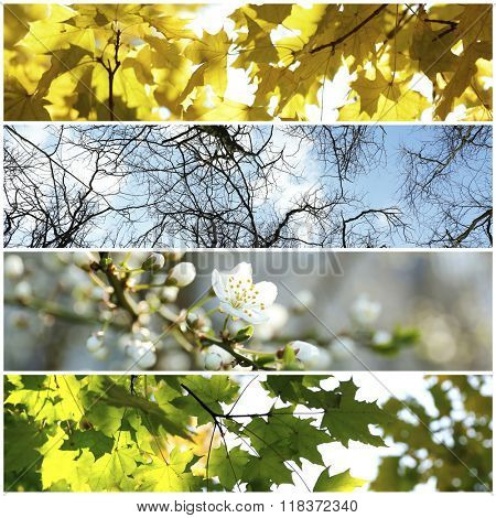 Four seasons collage: several photos of beautiful trees at different time of the year - winter spring, summer, autumn