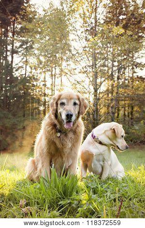 Golden retriever dog and best friend go to the park