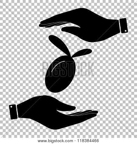 Oliva sign. Flat style icon