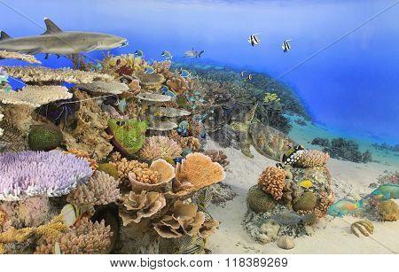 Oceania, Reef Coral