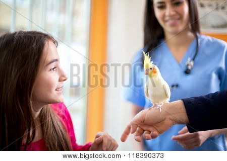 Cute girl at veterinarian with her nymph parrot