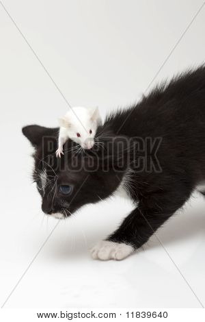 Child cat and grey mouse