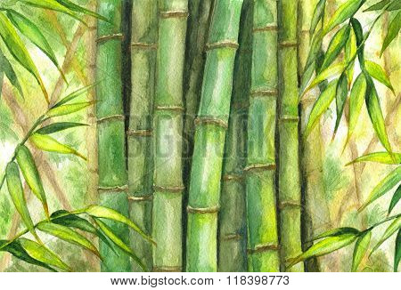 Green Bamboo Background.