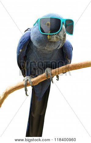 Funny animal portrait of a blue parrot with oversized sunglasses