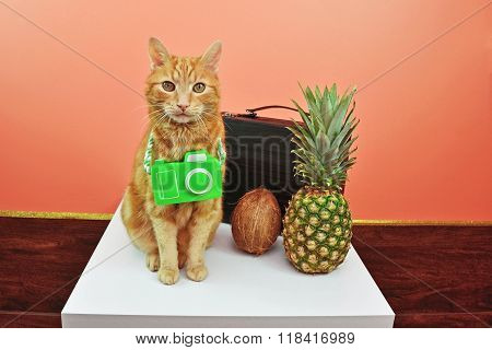 Indoor Cat Wants Tropical Vacation