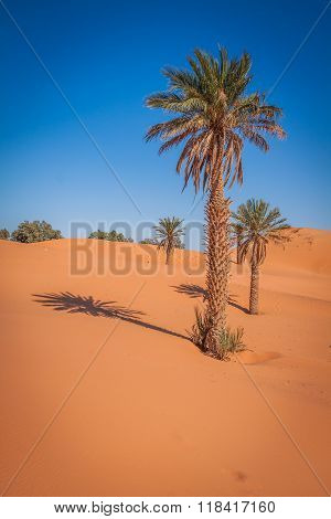 Palm Trees And Sand Dunes In The Sahara Desert, Merzouga, Morocco
