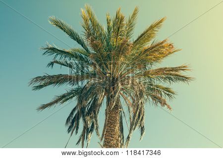 Palm Tree In Erg Chebbi, At The Western Edge Of The Sahara Desert