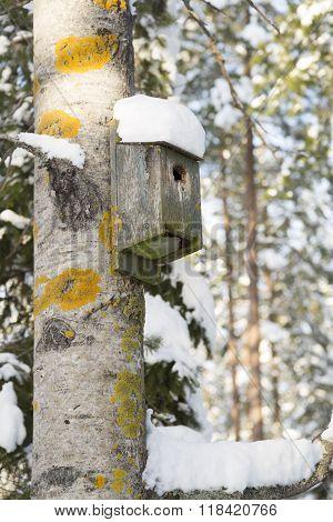 Birdhouse On Aspen Tree