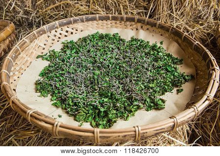 Silkworms eating mulberry leaf in the tray.