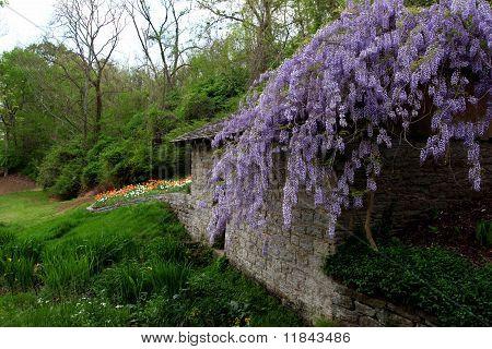 Spring Blooms in Nashville