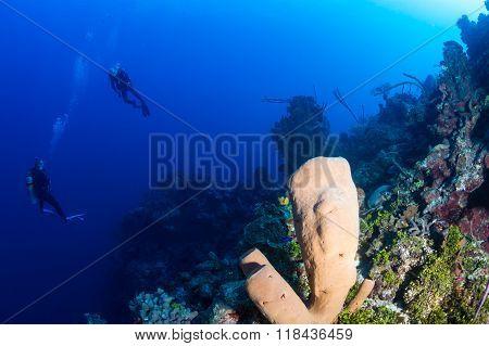 SCUBA divers and a sponge