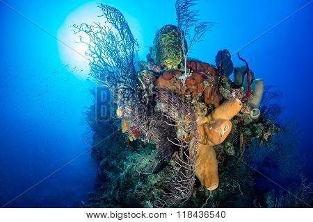 Colorful, delicate corals