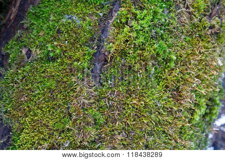 texture of the moss