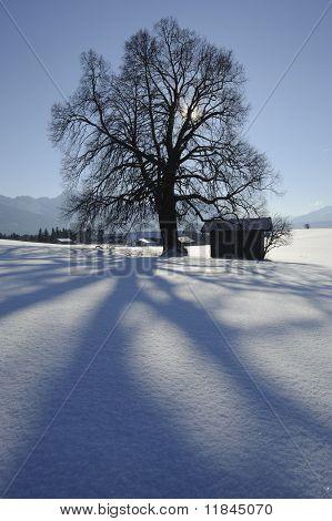 single tree in winter
