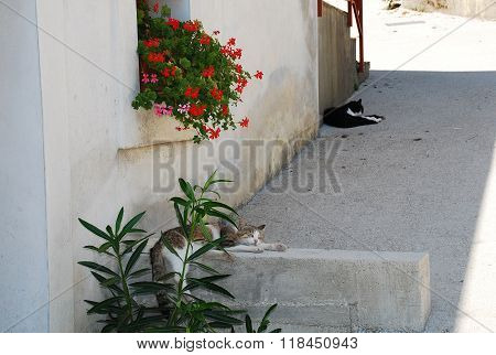 Street Cats In Pican