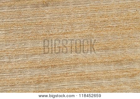 Texture Of Papyrus