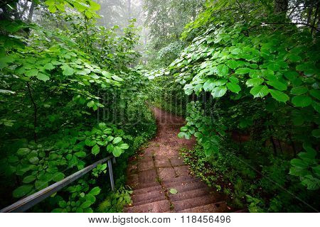 Wooden stairway in forest disappearing in fog