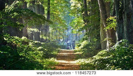 Road in a beautiful deciduous forest in the morning