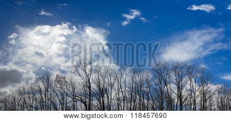 Group Of Trees Against The Sky In Early Spring