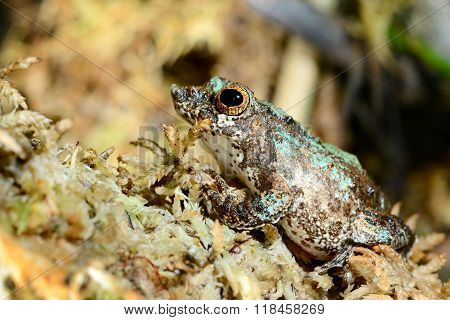 Colorful frog in terrarium, sitting on moss