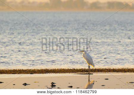 White heron Egretta garzetta standing on his fit at a wetland in Nafplio Greece.