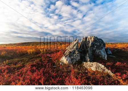 Tundra Fall Colors