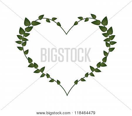 Green Vine Leaves In Lovely Heart Shape