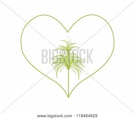 Fresh Dracaena Plants In A Heart Shape