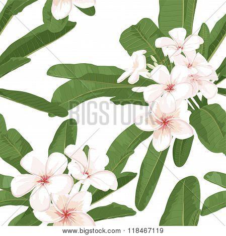 Plumeria seamless pattern