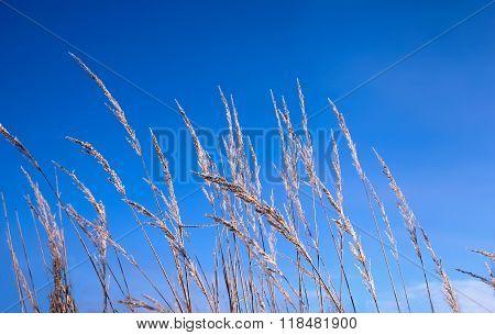 High Grass Against The Blue Sky
