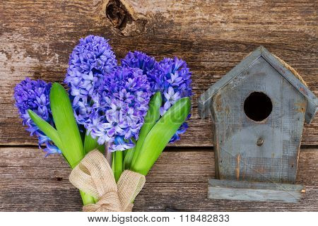 hyacinth flowers  and birdcage