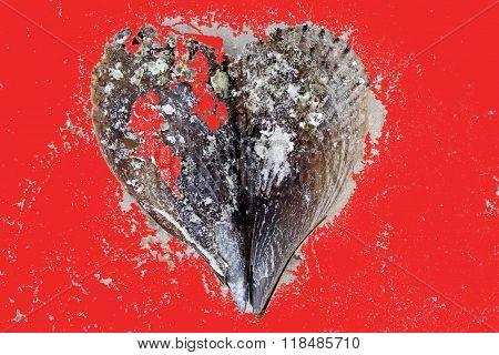 Valentine sea shell heart