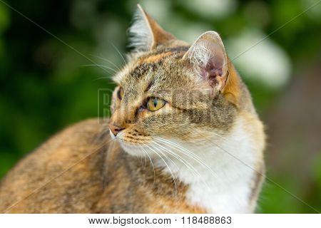 a pet cat