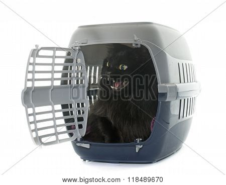 Large Black Cat In Kennel