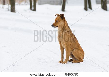 Mixed breed dog waiting for master return home