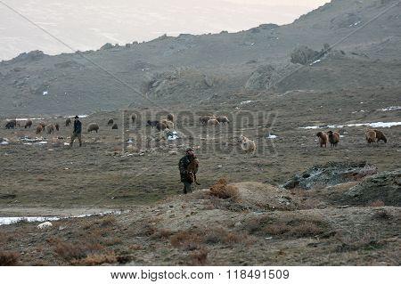 Azerbaijani shepherds with flock of sheep and goats