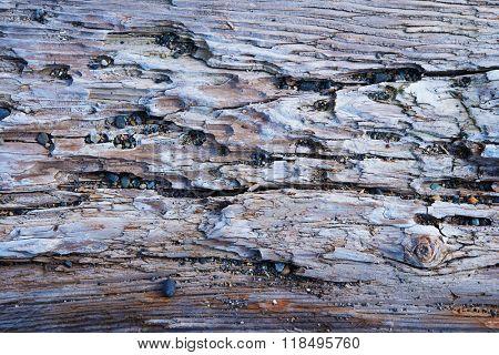 Ocean drift wood close up.