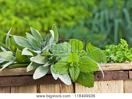 Sage And The Lemon Balm On The Old Wooden Crate