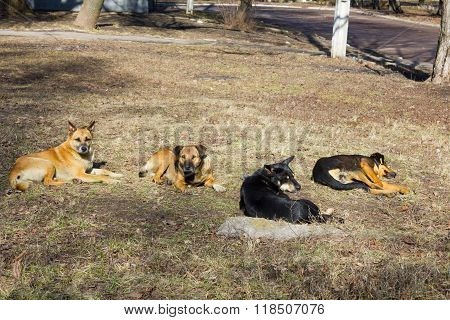 flock of stray dogs on the street