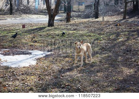 dog alone  lonely