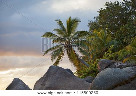 Palm Trees And Rocks During Sunset In The Seychelles..