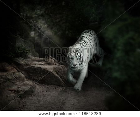 White Tiger In Forest