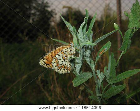 Butterfly On A Plant Stem
