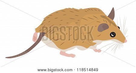 Cartoon Spiny Mouse