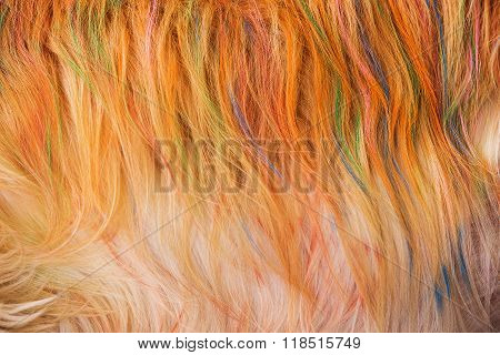 Dog Golden Hair Coloring Is Beautiful.