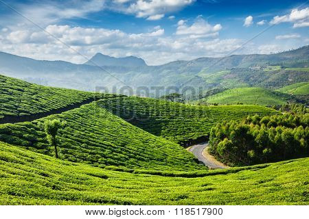 Green tea plantations in the morning, Munnar, Kerala state, India